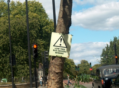 Funny Sign on Low London Tree for Tall London Buses