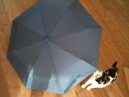 Upscale Expensive Umbrella
